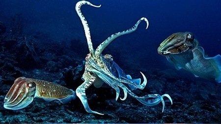 꼬리뻬 해양동물