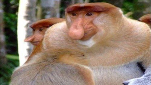 코타키나발루 코주부 원숭이