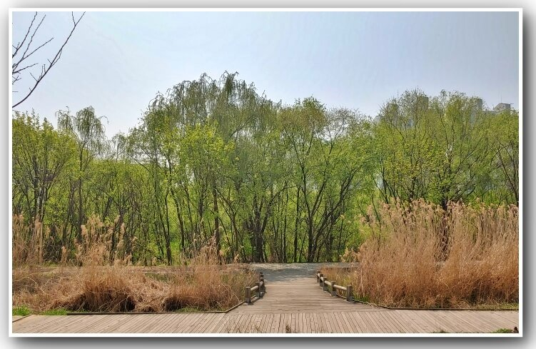 Seakgang-ecological-park