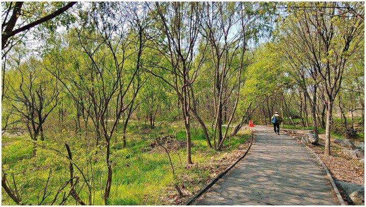 seoul-trail-walking-view