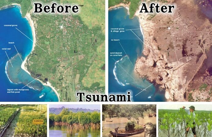 쓰나미-맹그로브-숲