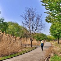 Seoul walking trail course of Ecological park, its different world ^^