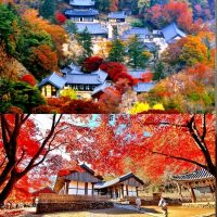 Korea travel bubble Gong ju one day tour of 3 itineraries guide recommend